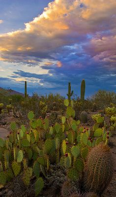 desert botanical garden   Desert Botanical Garden 75th Anniversary Garden Party With Free ...