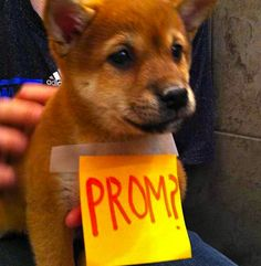 omg i'd die #prom #promposal #puppy it's like a really cute puppy and then they just like put a stickey note on it, idk how to explain it but the stickey note thing is just....AMAZING