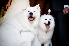 The cuteness level of these #wedding day #pups is making my #heart #melt!