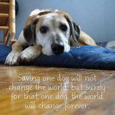 July 31st is Mutt's Day, do you need a new family friend? Stop by a local animal shelter today to give a furry friend a new home. #awww