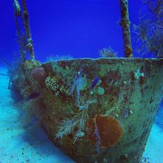 Grand Cayman Underwater Experience: Scuba Diving in the Caribbean Sea - Johnny Africa