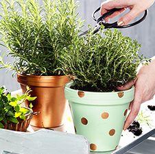 Met mintgroen en koperkleur verf maak je hippe plantenpotjes voor in de tuin of voor op je balkon #pipoos #verf