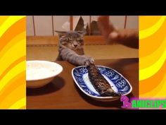 The Funniest and Most Humorous Cat Videos Everrr ✯ Funny Cats Compilation - YouTube
