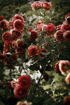 Roses ~ quilt color inspiration ~ mauve, lt pink, sage green, forest green
