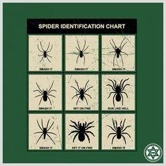 23 best spider identification images in 2019 vape tricks ideas rh pinterest com