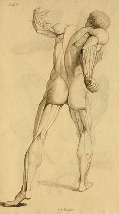 anatomi-model-karakalem-çizimleri-z2