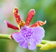 Orchid. | Flickr - Photo Sharing!