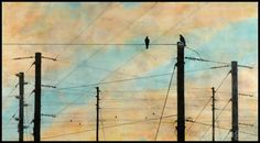 Jeff League - Encaustic painting with photography of birds communicating on telephone poles.