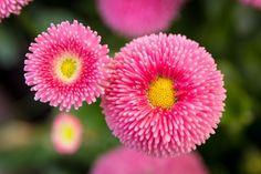 Opciones para diferentes climas, necesidades y gustos... ¿Te gusta el rosa? Pues disfruta con esta recopilación de flores preciosas.