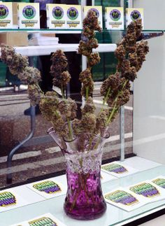 I brought you weed because flowers can't get you high...I wish someone did this for me :)