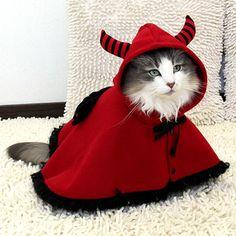 ネコだって、「ハッピーニャロウィーン」 ― 「iDog&iCat」によるハロウィーン仮装用の衣装 - えんウチ