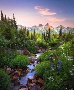 Mount Rainier National Park is a U. National Park located in Washington state…. Mount Rainier National Park is a U. Beautiful World, Beautiful Places, Wonderful Places, Beautiful Scenery, Amazing Places, Mount Rainier National Park, Yosemite National Park, Image Nature, Nature Aesthetic