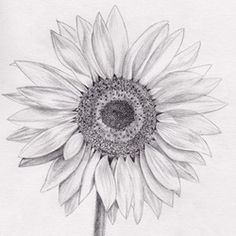 Sunflowers - South Lake Arts and Photo