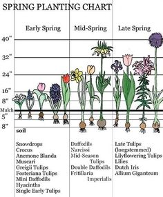 Time - Landscaping With Early Spring Bulbs - Spring Planting Chart -Bloom Time - Landscaping With Early Spring Bulbs - Spring Planting Chart - Spring Plants, Spring Garden, Planting Bulbs In Spring, Summer Bulbs, Spring Flowering Bulbs, When To Plant Bulbs, Early Spring Flowers, Spring Blooming Flowers, Spring Blooms