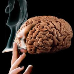 Descubren células nerviosas Gatekeeper que explica el efecto beneficioso de la nicotina sobre el Aprendizaje y la Memoria