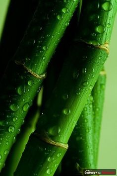 I love bamboo...so gorgeous...  Dp