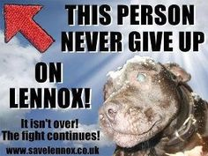 "READ READ!!Lennox was an innocent dog who was killed for looking like a pit-bull.That is illegal.I know the ""professional"" said that lennox was mean but if you look at pictures he is loving on her.Lennox may be gone but we can stop belfast from killing other pit-bulls!!R.I.P lennox u will nver be forgotten!!:'("