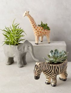 Succulents look great in wild zoo animal planters! From the succulent garden club board Home Decor Accessories, Decorative Accessories, Clothing Accessories, Potted Plants, Indoor Plants, Plant Pots, Cactus Plants, Indoor Cactus, Indoor Flowers