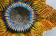 Jennifer Maestre sculptures made of color pencils.