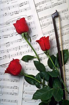 music and roses!