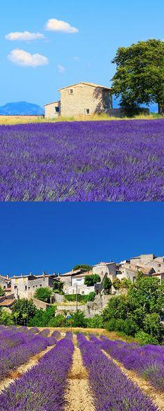 Visite os campos de #lavanda da #Provença no início de julho. Pegue um trem de #Paris para Ais de Provença.