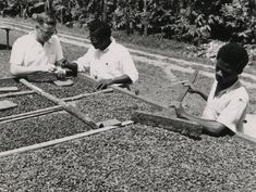 The National Archives UK - CO 1069-46-5 - Agriculture in Ghana - Wikipedia