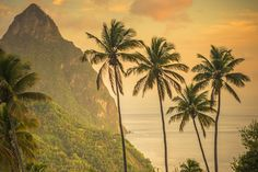 Read Top 10 St Lucia experiences