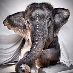 Beautiful portrait - boho elephant