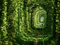 Tunnel of Love - Kleven, Ukraine | 25 Places That Look Not Normal, But Are Actually Real