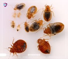 Anti Rat, Bug Exterminator, Bed Bug Control, Rid Of Bed Bugs, Bed Bugs Treatment, Termite Control, Plastic Mesh, Bees And Wasps, Pest Control Services
