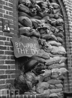Guard Dog... A steel-hatted bulldog on guard outside a block of flats in London, 1940. Photo by Fred Morley. °