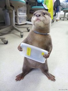 All of these pictures of baby animals, but this otter just wants to show you its guitar, and was wondering if you have the time to check it out. Cute Funny Animals, Cute Baby Animals, Funny Cute, Animals And Pets, Wild Animals, Otters Cute, Baby Otters, Baby Animals Pictures, Funny Animal Pictures