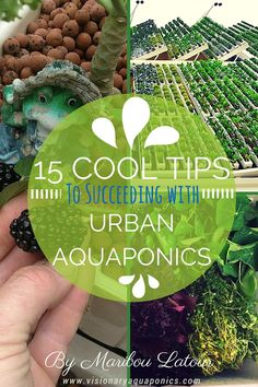 Visionary Aquaponics - Inspiring a Global Aquaponics Movement