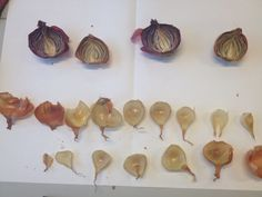 Disassembled dried out onions