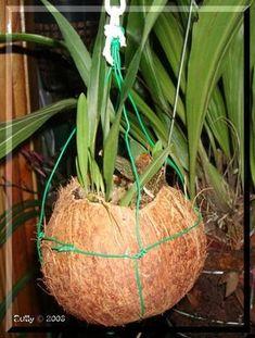 Orquideas Cymbidium, Orchids Garden, Diy Fire Pit, Art N Craft, Garden Design, Planters, Coconut, Nuevas Ideas, Green