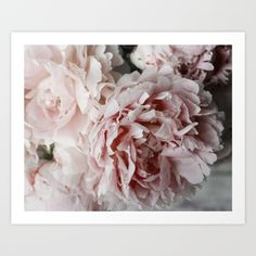 A bunch of beautiful pink peony flowers.<br/> <br/> pink, salmon, flower, flowers...