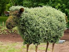 Sheep at the International Mosaiculture Exhibition in Montreal • Summer, 2013 • Moss was packed into a wire frame and then planted.