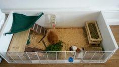 My homemade guinea pig cage. IKEA hack