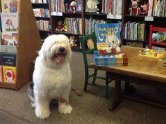 Nana, the old english sheepdog