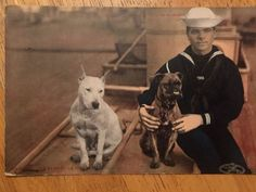 US Coast Guard Postcard from 1907 with Boxer and American Bulldog