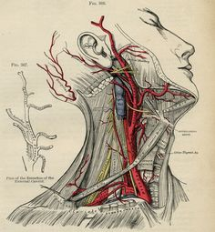 Human Head - Human Body Anatomy Illustration  - 1887 Color Medical Antique Plate via Etsy