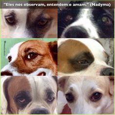"""""""Eles nos observam, entendem e amam."""" (Nadyma)  Hoje assisti na Discovery o primeiro episódio da Série SOBRE CÃES E HOMENS e fiquei encantada! Narra a história de cães (dos selvagens aos domesticados) e demonstra resultados de pesquisas que avançam, comprovando o papel dos cães nos relacionamentos modernos com os humanos. Sempre soube que eles nos amam e nos entendem. Vale a pena continuar assistindo a série e acompanhando as pesquisas."""