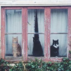 11.30.16 (via cats in window tumblr, photographer unknown) —the dream of three cats
