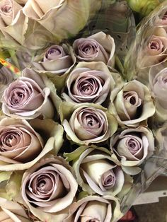 Rose 'Amnesia'...grey/lilac in colour which is very popular for vintage bouquets! Sold in bunches of 20 stems from the Flowermonger the wholesale floral home delivery service.
