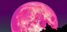 Venus and Jupiter will also be visible to the naked eye on April ahead of the Pink Moon. After the March Blue Moon, here comes the April Pink Moon right on schedule. The full moon of April — or . Full Moon Rising, Moon Rise, Full Moon Today, Full Strawberry Moon, April Full, Sturgeon Moon, Scorpio Moon, Libra, Pink Moon