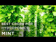 On Sale Now: Celebrate Summer with a Free ZipGrow Farm Wall - YouTube