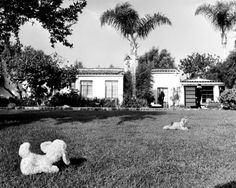 The stuffed animals—a dog and, past it, the mysterious tiger delivered to Marilyn Monroe's hacienda the morning of her death.
