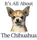 love my chihuahuas - Google Search Raza Chihuahua, Chihuahua Puppies, Chihuahuas, Teacup Chihuahua, Chihuahua Quotes, Dog Quotes, Little Dogs, Dogs Peeing In House, I Love Dogs