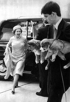 Corgis wait to greet their Majesty.  @Jennifer Steinke I pin an unlikely amount of corgis for you.