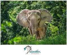 Pittsburgh Zoo - Elephant www.nicdreamcatcher.com ©Nicole Iagnemma